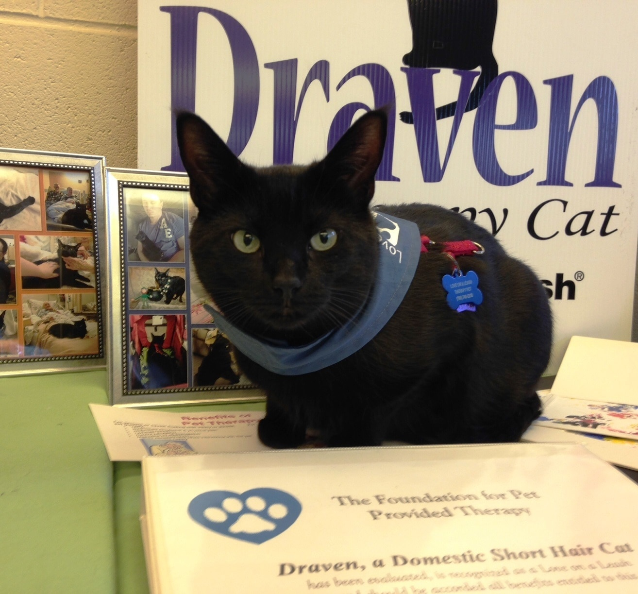 Draven the pet therapy cat sits in front of booth.