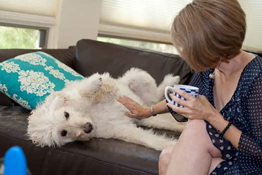 Woman rubs her white dogs belly while sitting on a brown leather sofa.