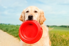 Dog red plate