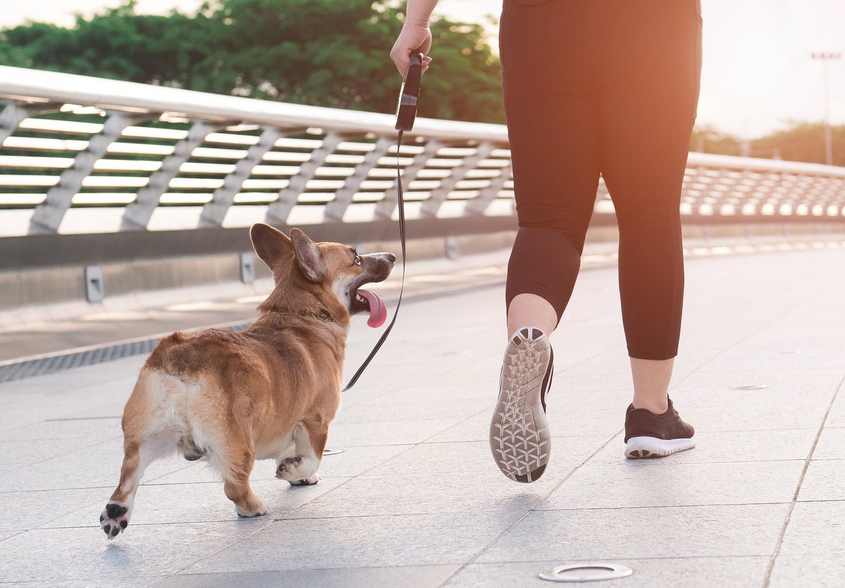 Woman running with a dog (Pembroke Welsh Corgi) in the morning on the road