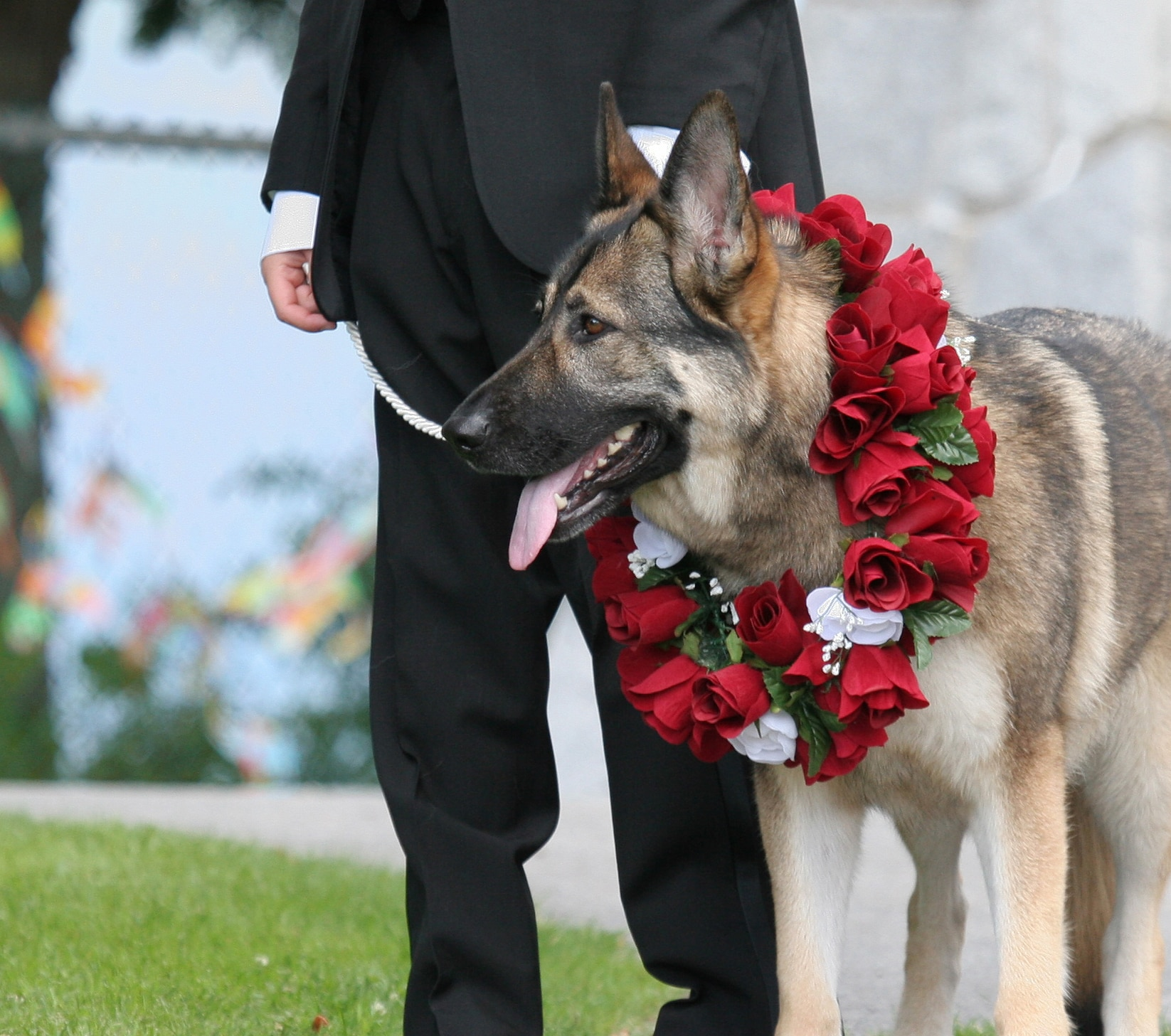 German shepherd with wreath around neck sits next to man.