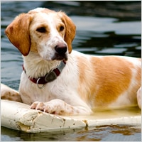 Adult dog on raft